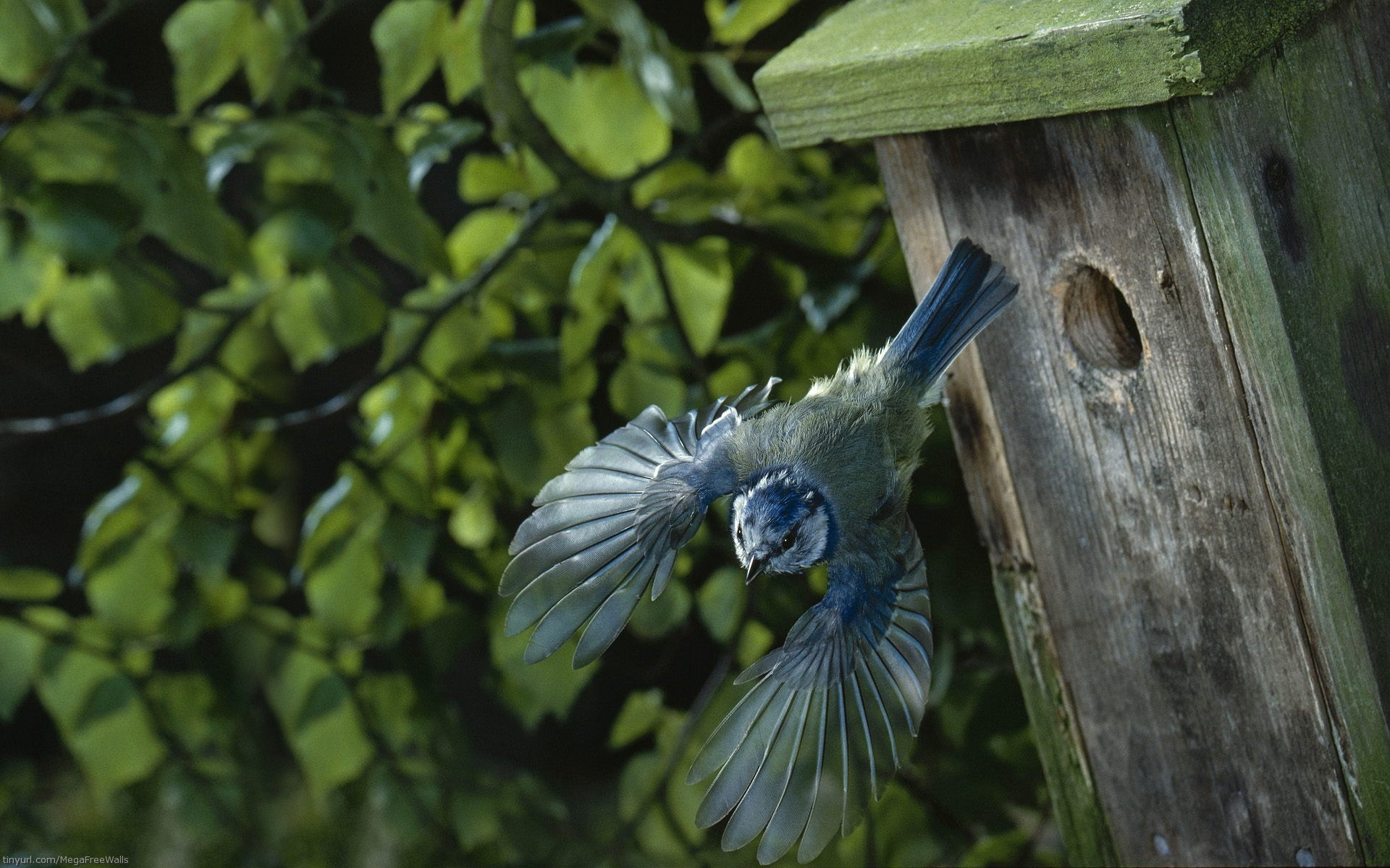 Bird Full HD Wallpaper and Background Image | 1920x1200 ...