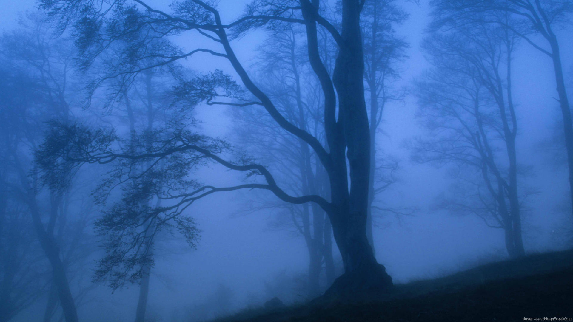 Fog Full Hd Wallpaper And Background Image 1920x1080