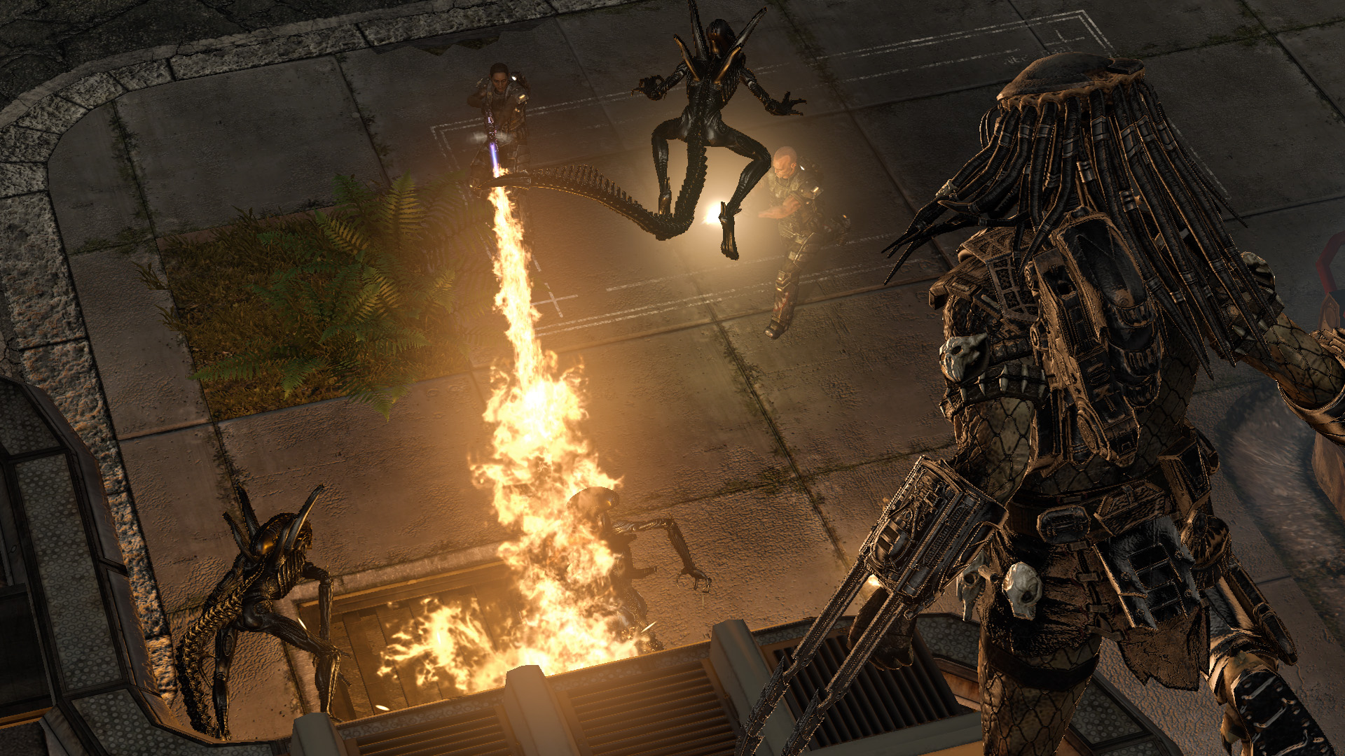 Aliens Vs. Predator wallpapers or desktop backgrounds  |Alien Vs Predator Xbox 360 Wallpaper