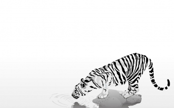 Tier - Weißer Tiger Wallpapers and Backgrounds ID : 289