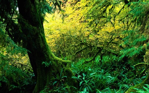 Earth Forest Tree Wood HD Wallpaper | Background Image