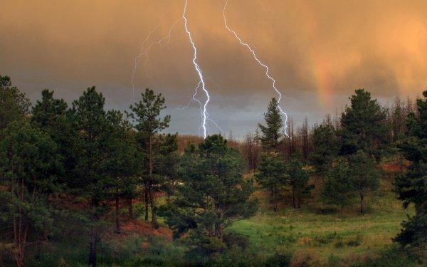 Photography Lightning Tree HD Wallpaper | Background Image