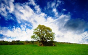 Earth - Tree Wallpapers and Backgrounds ID : 34105