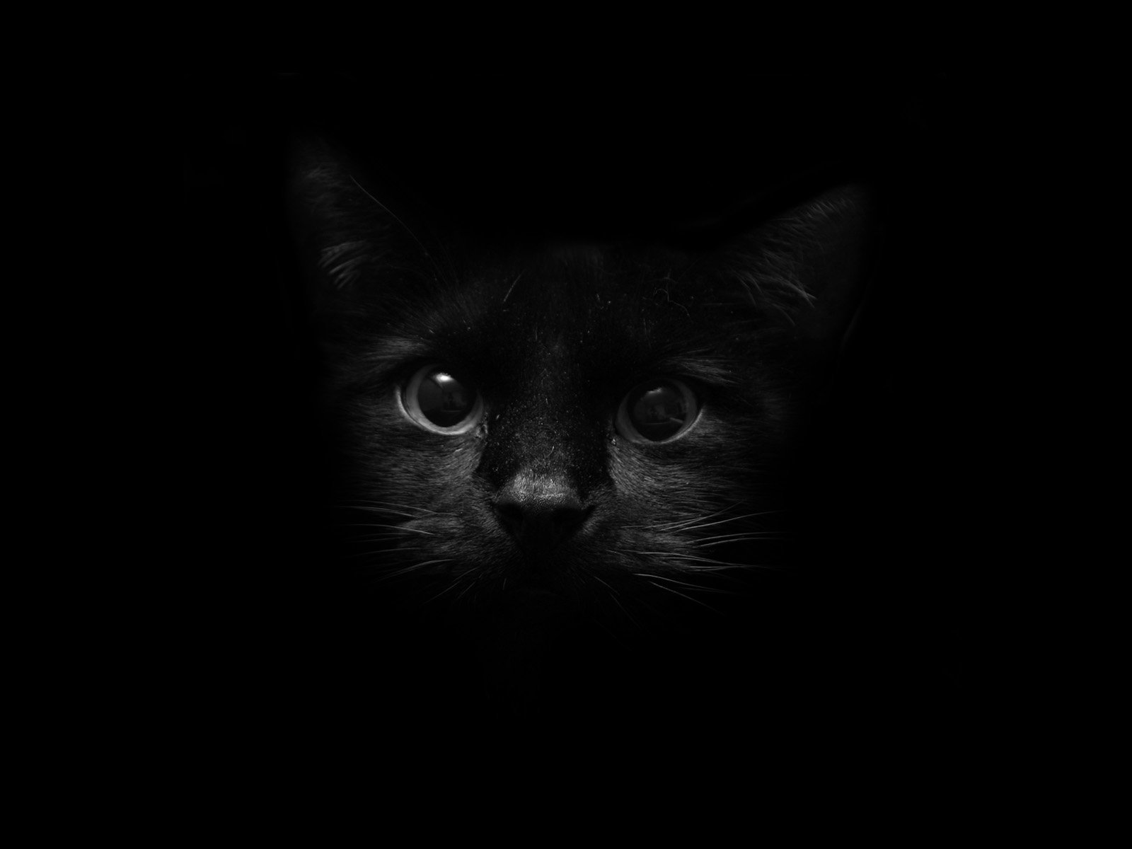 Animal - Cat  Animal Black Wallpaper