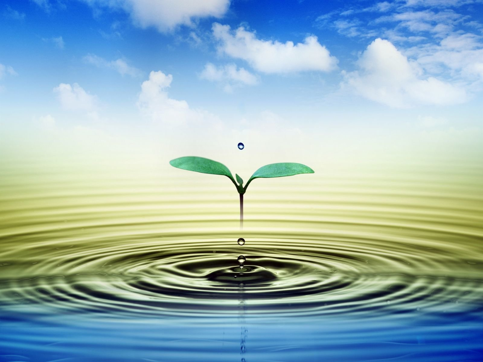 Earth - Close Up  Water Water Drop Sky Cloud Plant Wallpaper