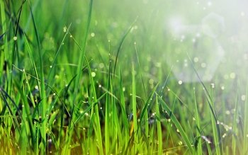 Earth - Grass Wallpapers and Backgrounds ID : 4487
