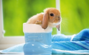Animal - Rabbit Wallpapers and Backgrounds ID : 45095