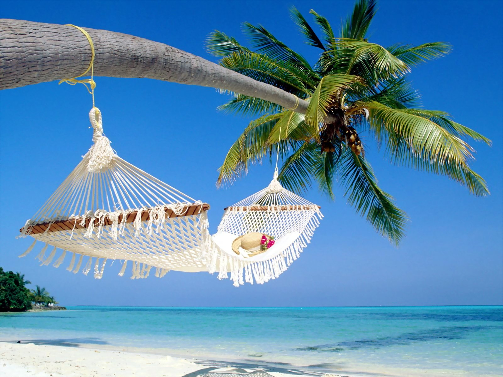 Photography - Beach  Tree Palm Tree Ocean Hammock Hat Wallpaper