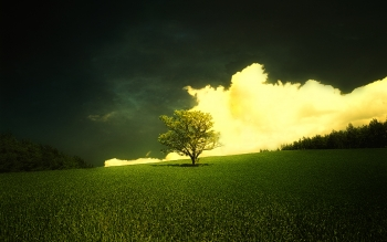 Earth - Tree Wallpapers and Backgrounds ID : 49865