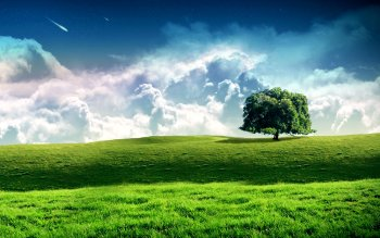 Earth - Tree Wallpapers and Backgrounds ID : 53387