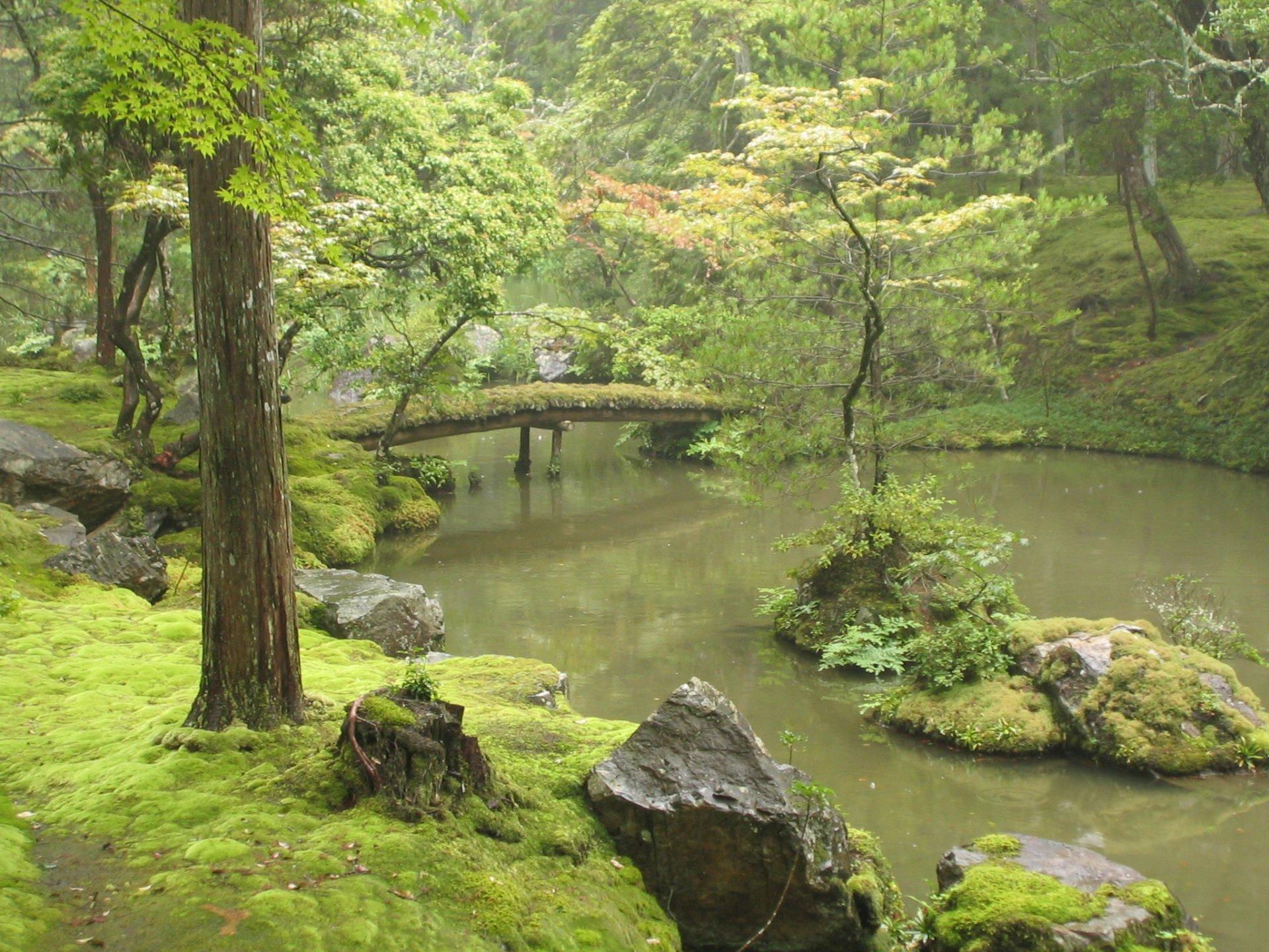 Man Made - Trädgård  Moss Stream Bro Tree Bakgrund