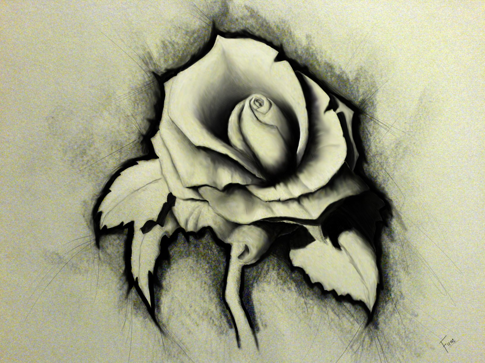 Artistic - Flower  White Rose Artistic Drawing Wallpaper