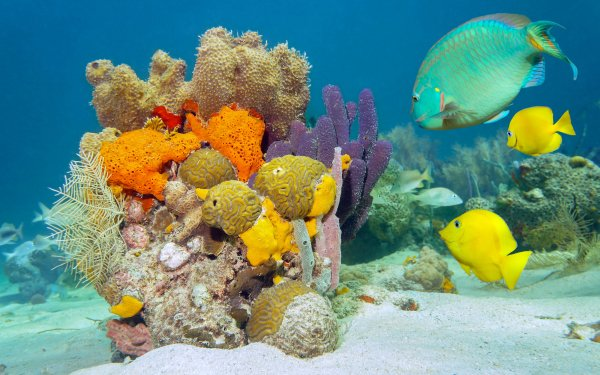 Animal Fish Fishes Reef Sea Bed HD Wallpaper   Background Image