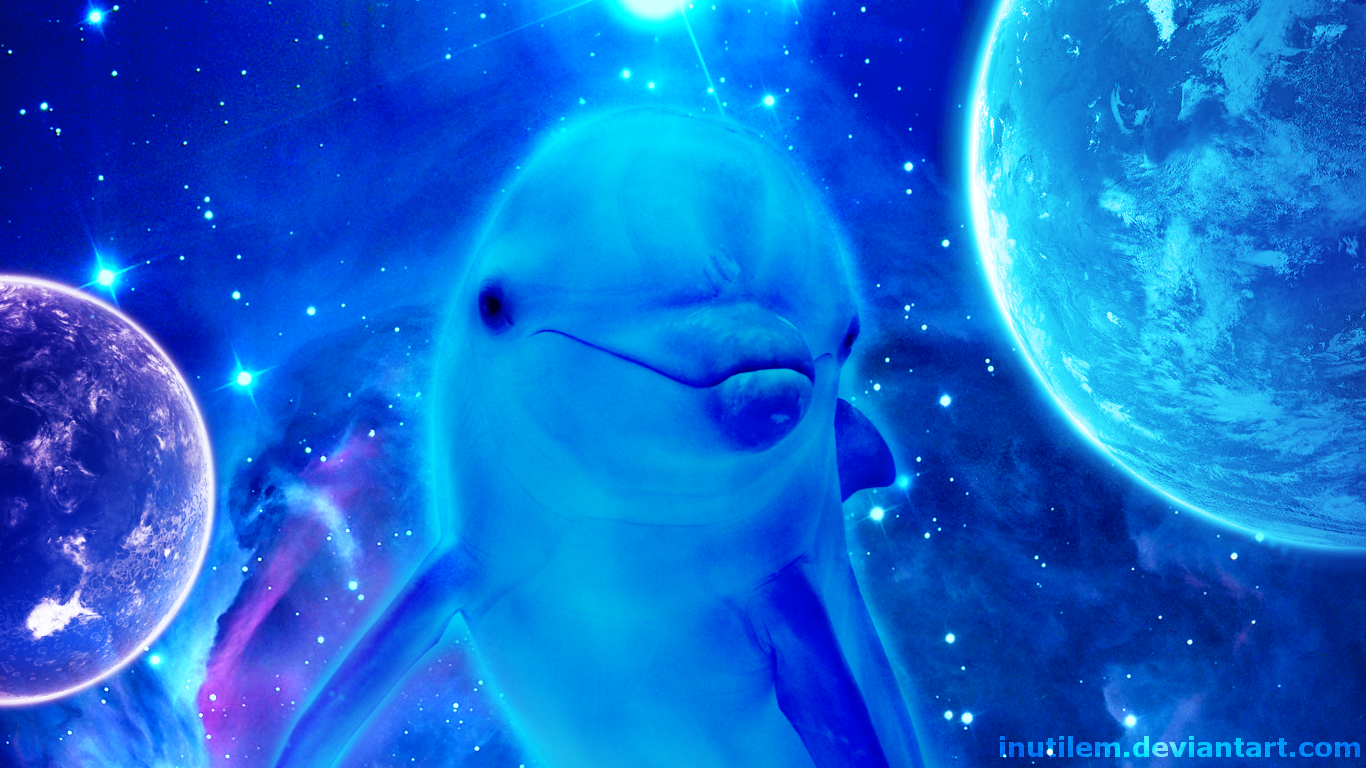 206 dolphin hd wallpapers background images wallpaper abyss hd wallpaper background image id563300 1366x768 animal dolphin voltagebd Gallery