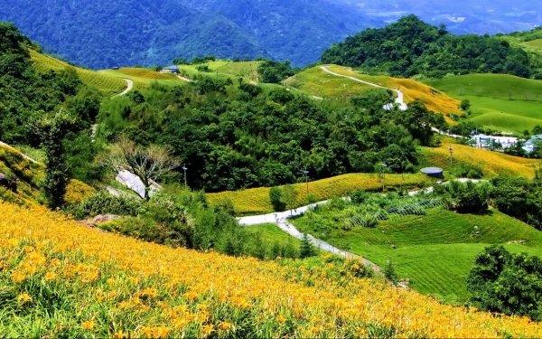 Fotografía Paisaje Campo Granja Verde Amarillo Fondo de pantalla HD | Fondo de Escritorio