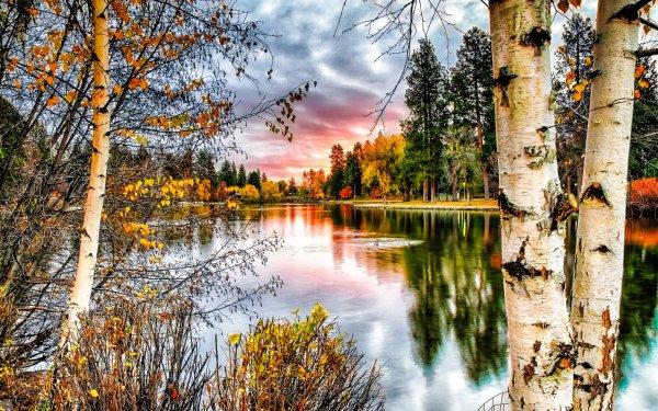 Earth Landscape Wood Birch Fall HD Wallpaper | Background Image