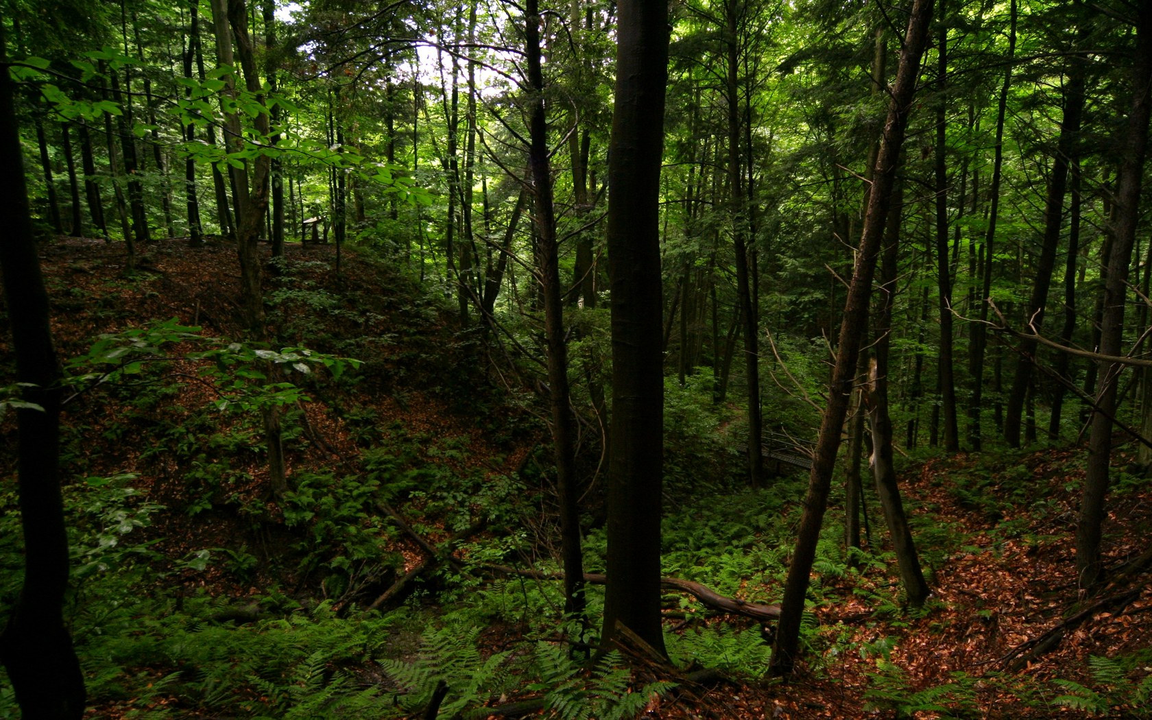 Forest Wallpaper And Background Image 1680x1050 Id5787