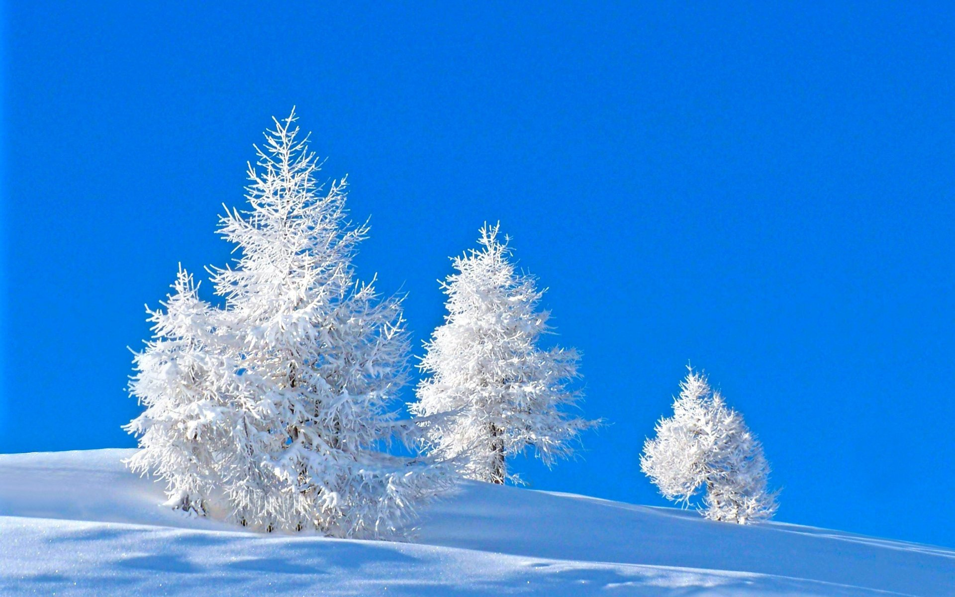 Earth - Winter  Blue Nature Snow Tree White Wallpaper