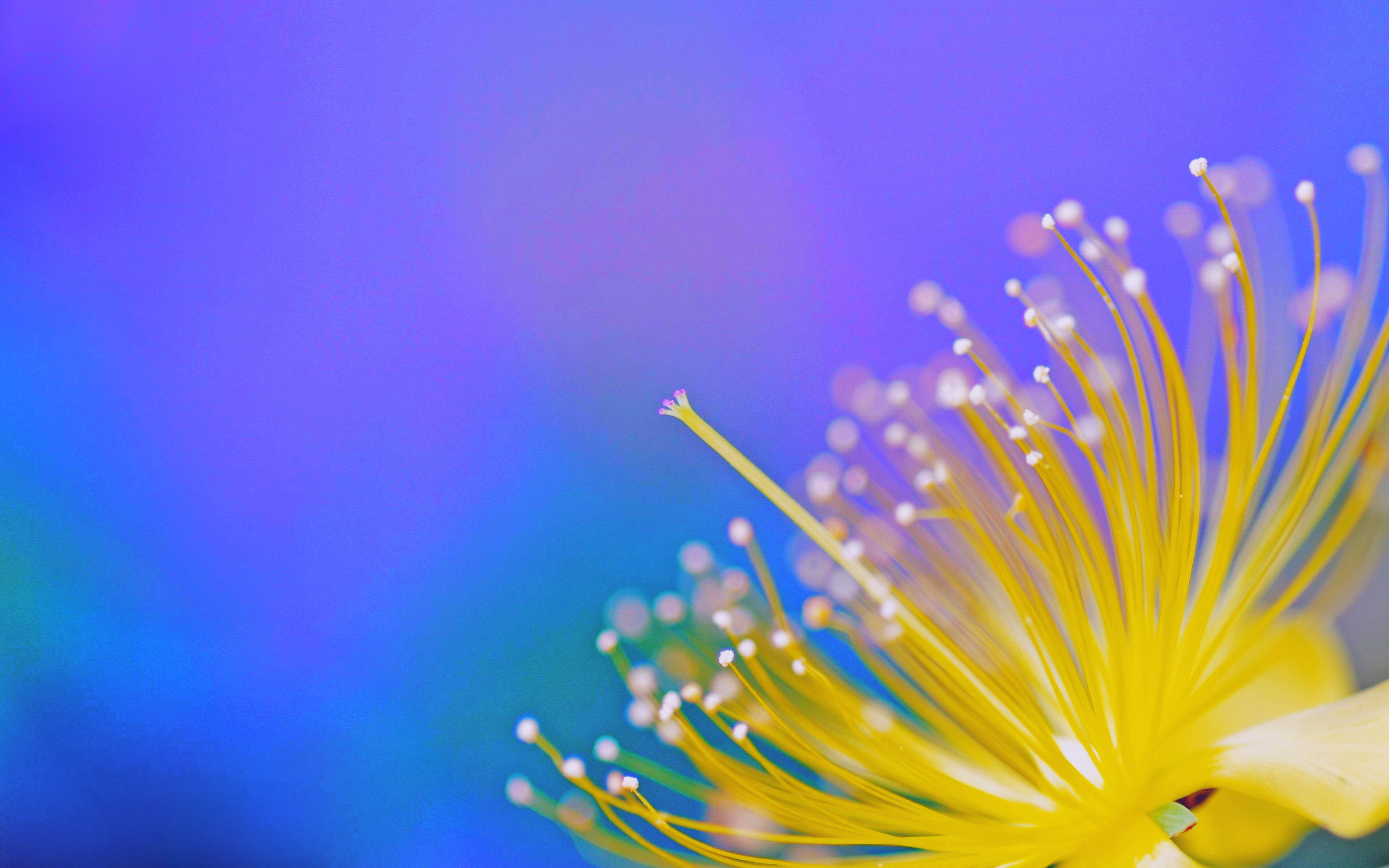 NATURE 54 colors of spring 17april2015friday VersionOne 205531 3840x2400 HIGHRES 4k ...
