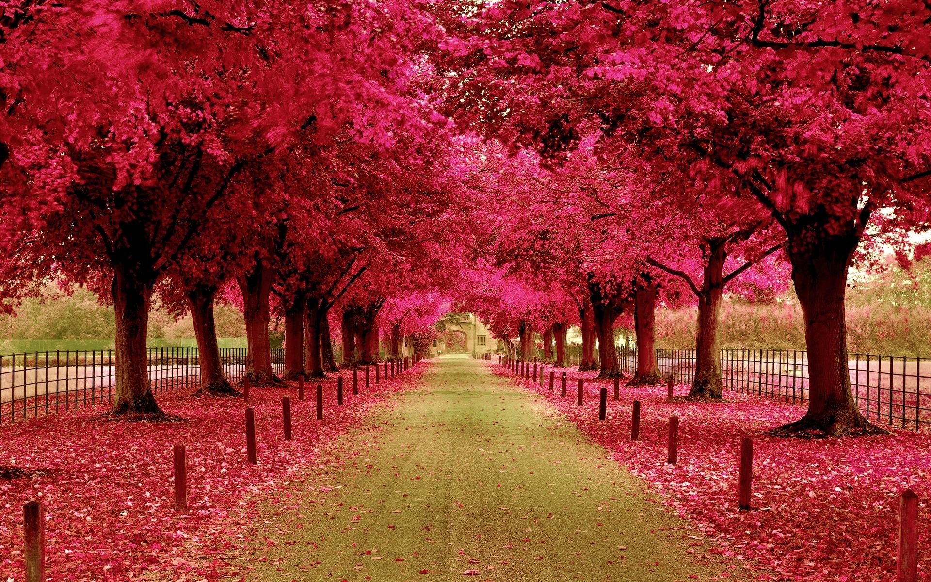 Hd wallpaper park - Photography Park Walkway Tree Fall Pink Leaf Wallpaper