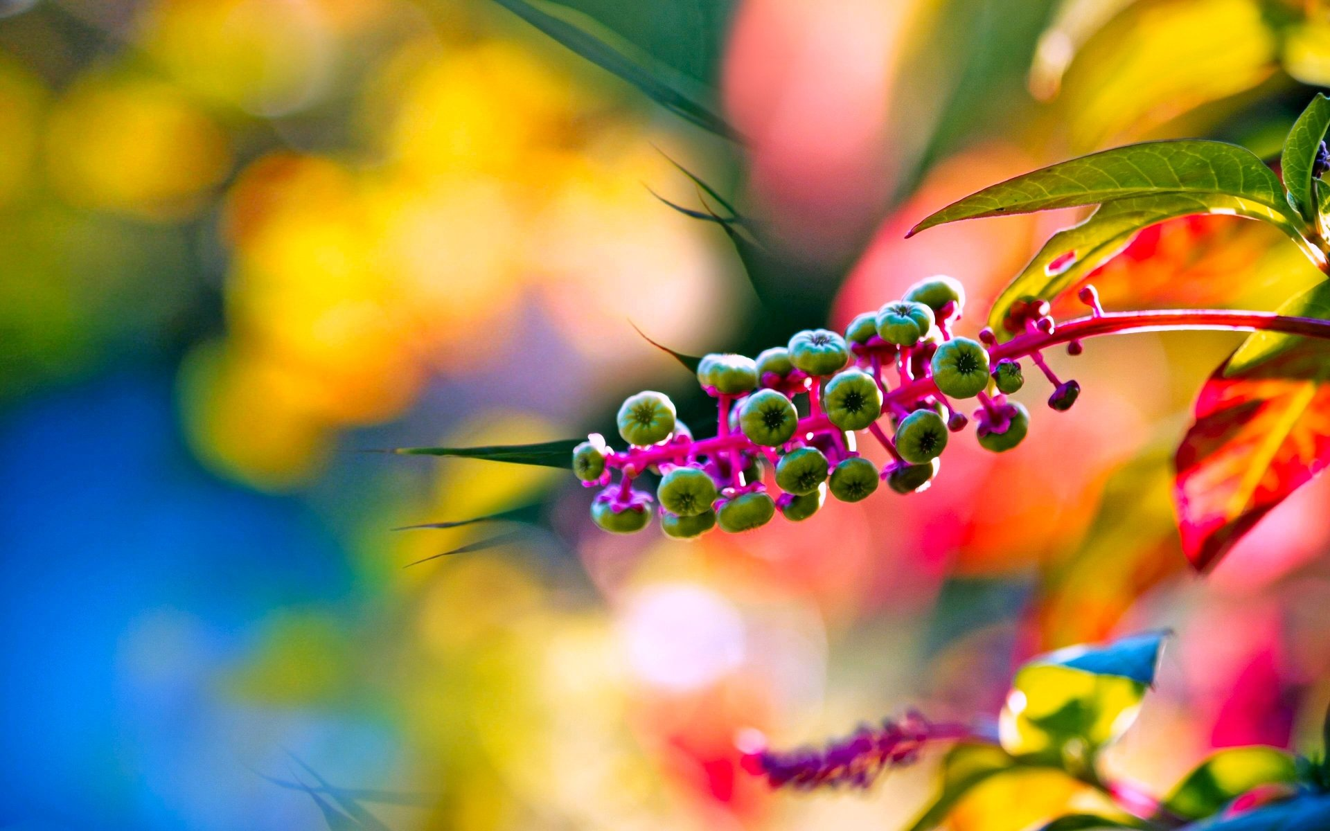 Earth - Spring  Colorful Sunny Nature Blur Bokeh Wallpaper
