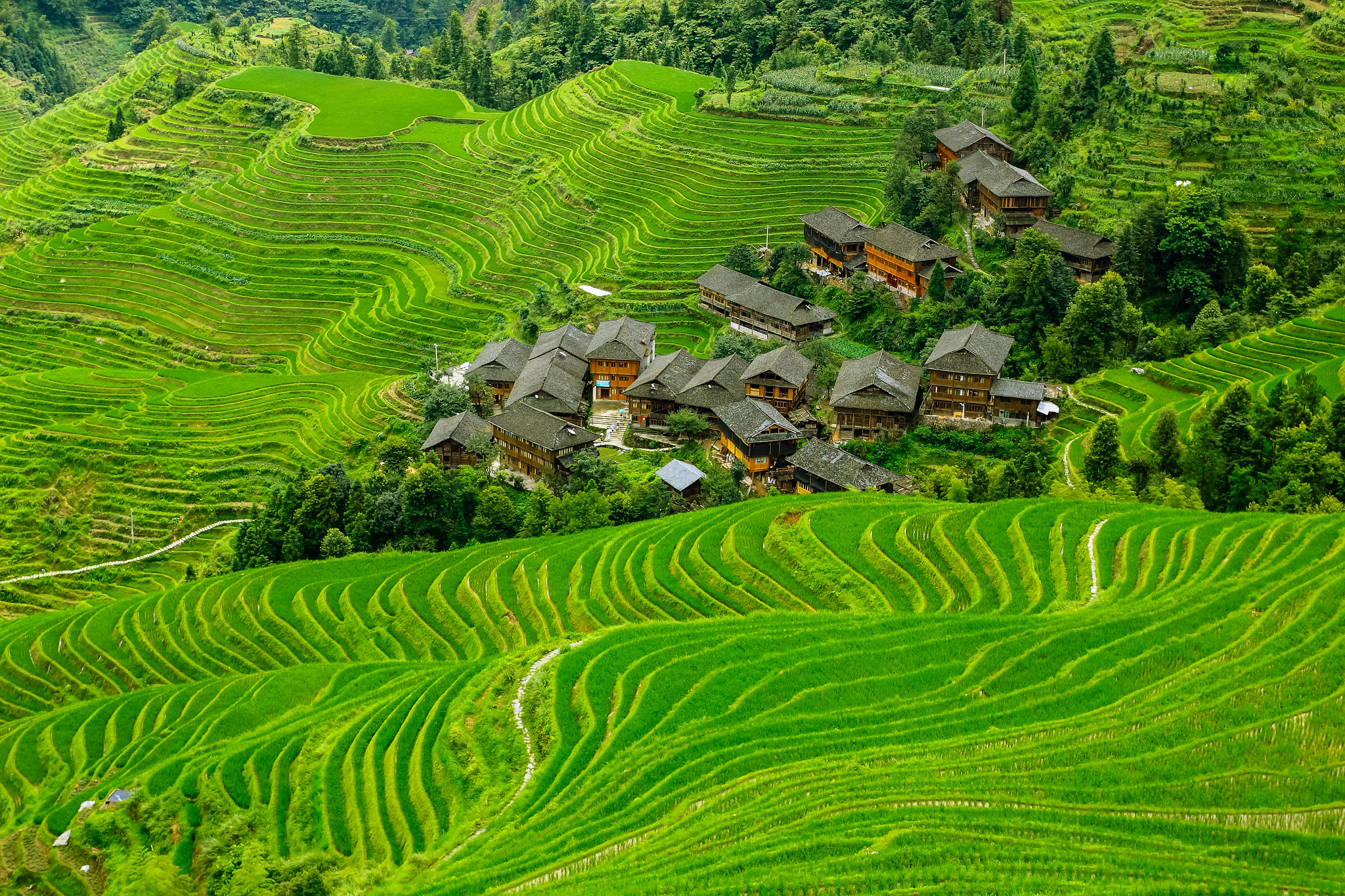 Rice terrace full hd wallpaper and background image for Full wall wallpaper