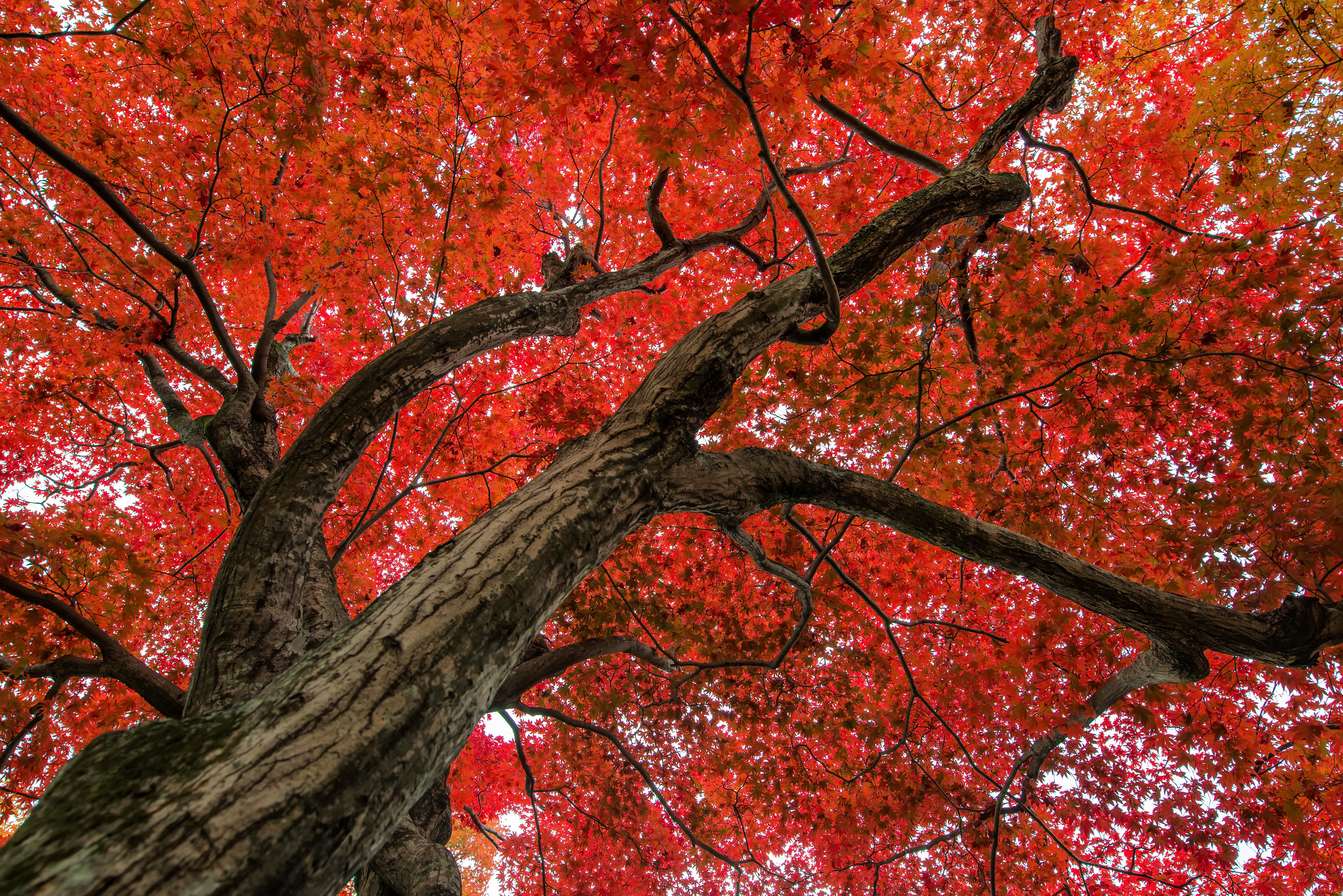 Tree Of Life 5k Retina Ultra Fondo De Pantalla Hd Fondo De