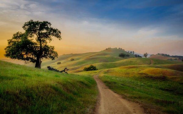 Tierra/Naturaleza Paisaje Hill Árbol Camino Primavera Fondo de pantalla HD | Fondo de Escritorio