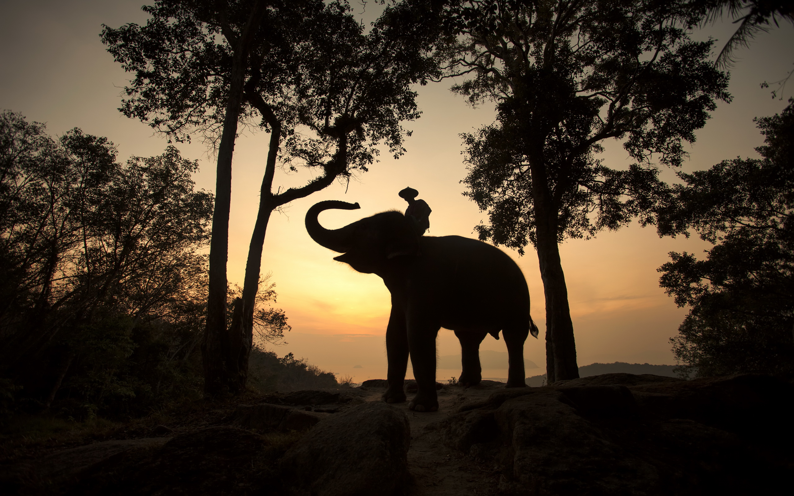 Thailand Elephants Wallpapers 9 Wallpapers HD Wallpapers
