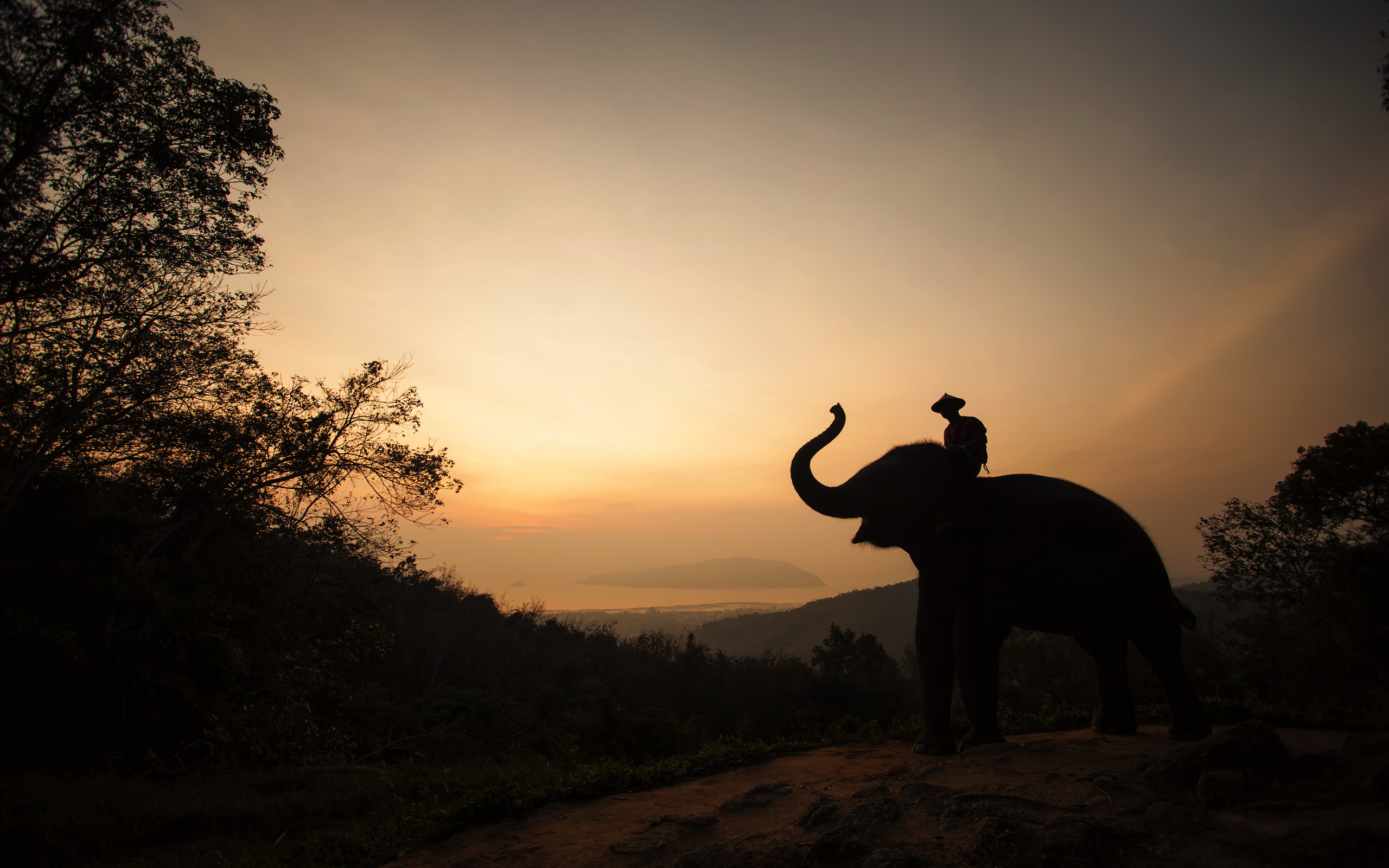 Elephants and mahouts in the morning full hd wallpaper and for Foto de fond ecran