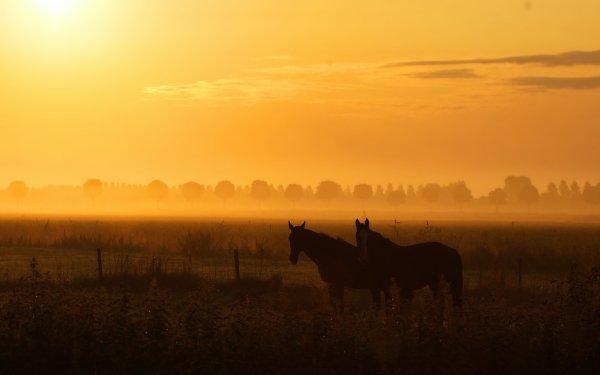 Animales Caballo Amanecer Granja Countryside Paisaje Naturaleza Cielo Fondo de pantalla HD | Fondo de Escritorio