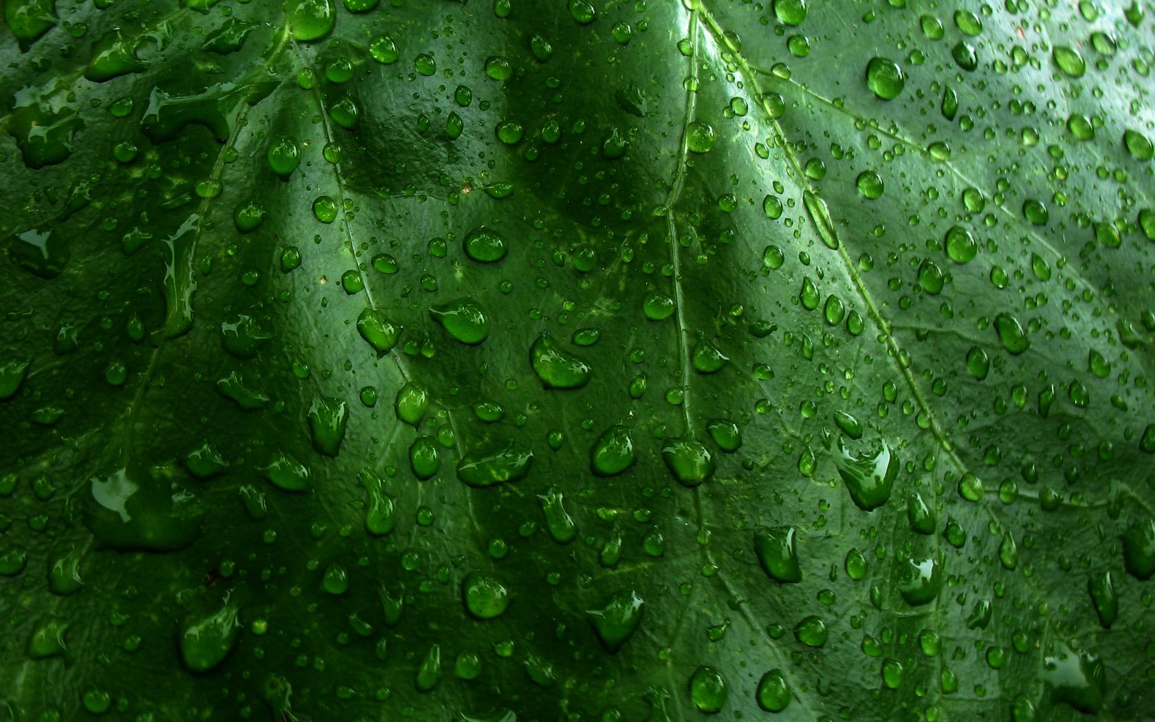 Earth - Water Drop  Raindrops Plant Wallpaper
