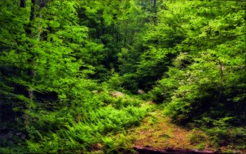 Earth - Forest Wallpapers and Backgrounds ID : 64297