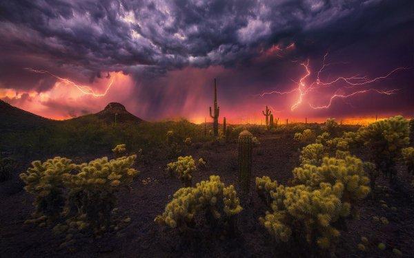 Photography Lightning Desert Cactus HD Wallpaper | Background Image