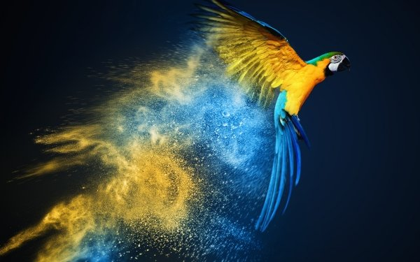 Animales Guacamayo azul y amarillo Aves Loros Ave Loro Guacamayo Fondo de pantalla HD | Fondo de Escritorio