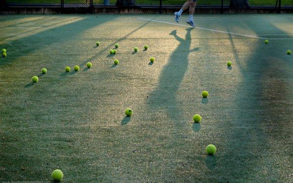 Sports Tennis Ball HD Wallpaper | Background Image