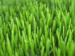 Grass HD Wallpapers | Background Images