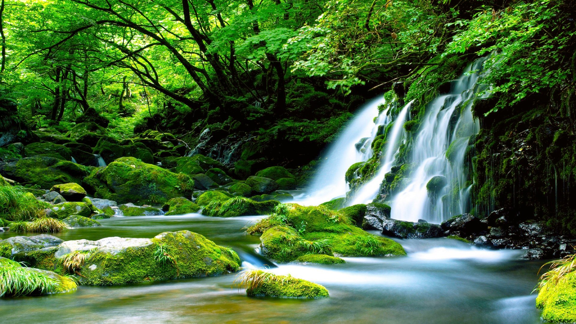 1920x1080 Hd Wallpapers Waterfall: Waterfall In Forest HD Wallpaper