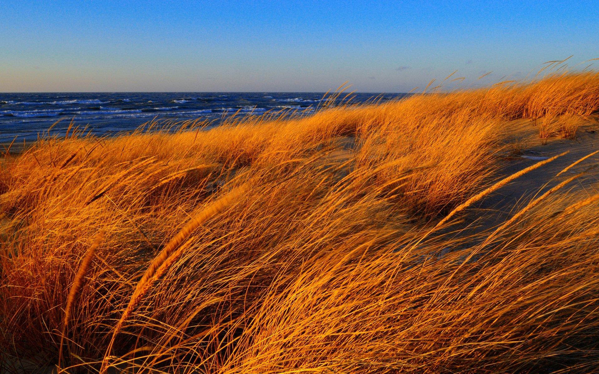Earth - Beach  Nature Grass Ocean Sand Horizon Wallpaper