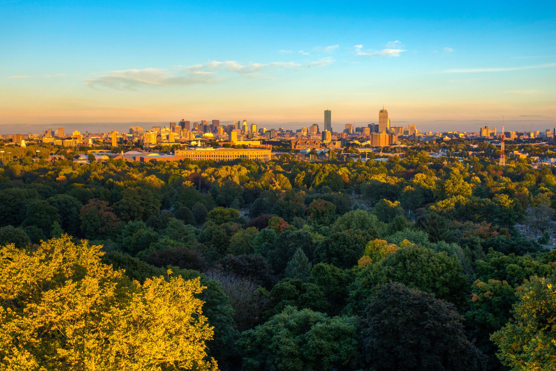 Man Made - Boston  USA City Landscape Tree Horizon Wallpaper