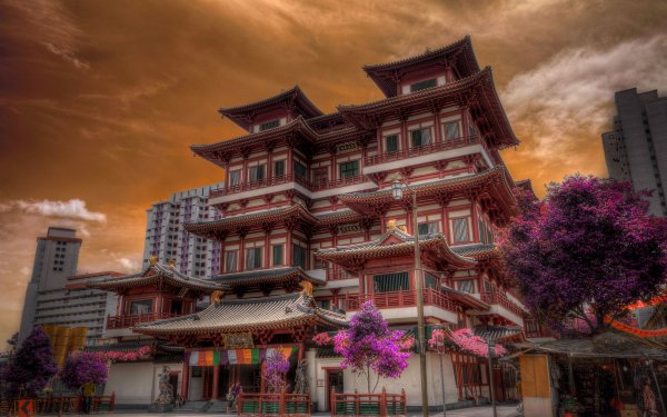 Man Made Building Buildings Architecture Singapore Tree Blossom HDR HD Wallpaper   Background Image