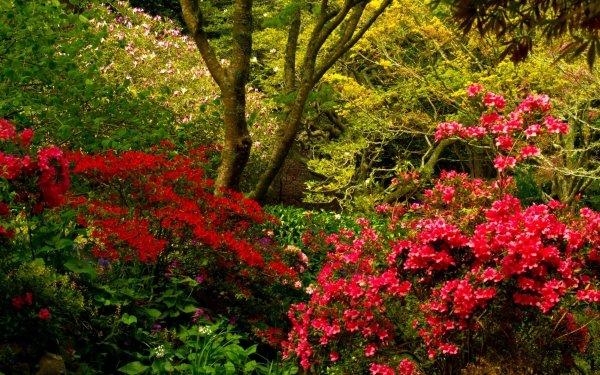 Man Made Garden Tree Shrub Colors Flower Pink Flower HD Wallpaper | Background Image
