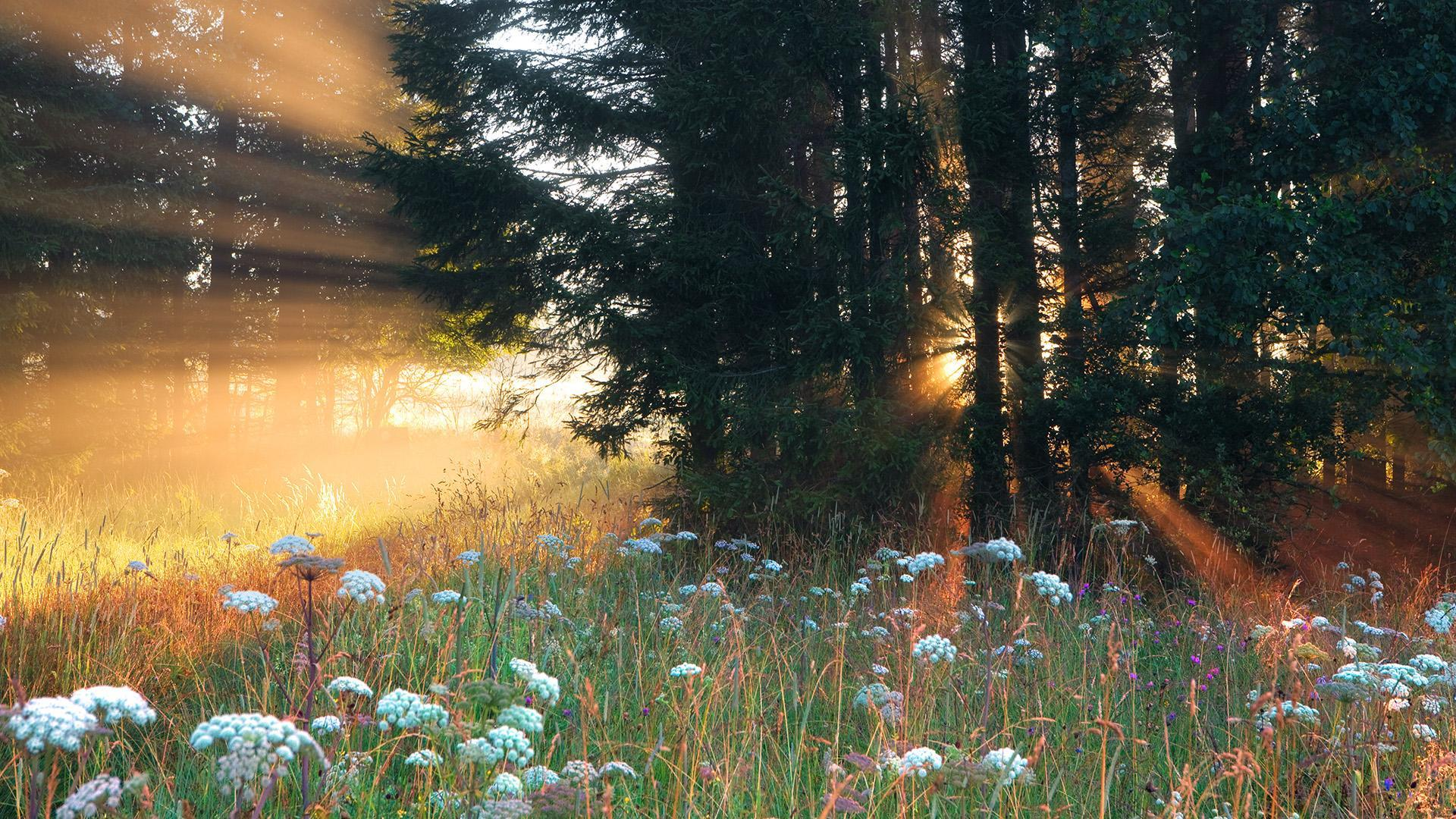 Sun Shining On Forest Flowers Hd Wallpaper Background Image