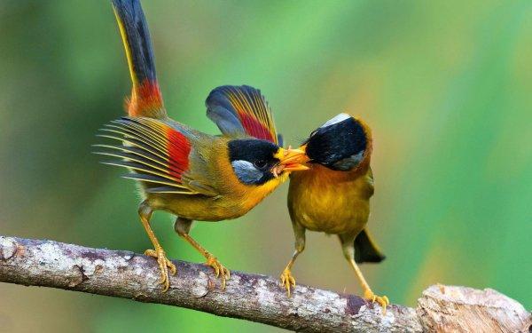 Animal Bird Birds Branch HD Wallpaper | Background Image