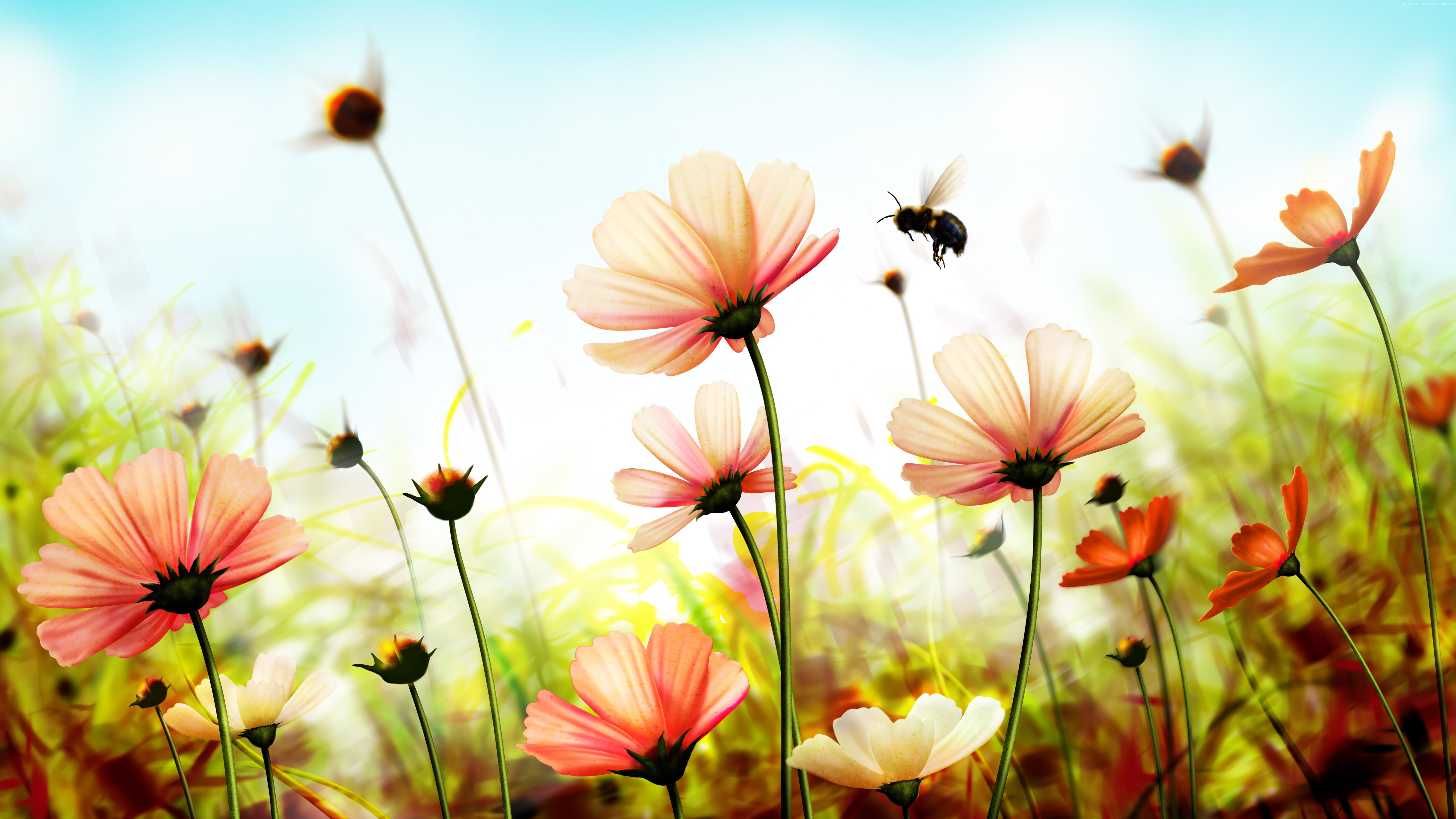 Pink Cosmos and Bumblebee k Retina Ultra HD Wallpaper and