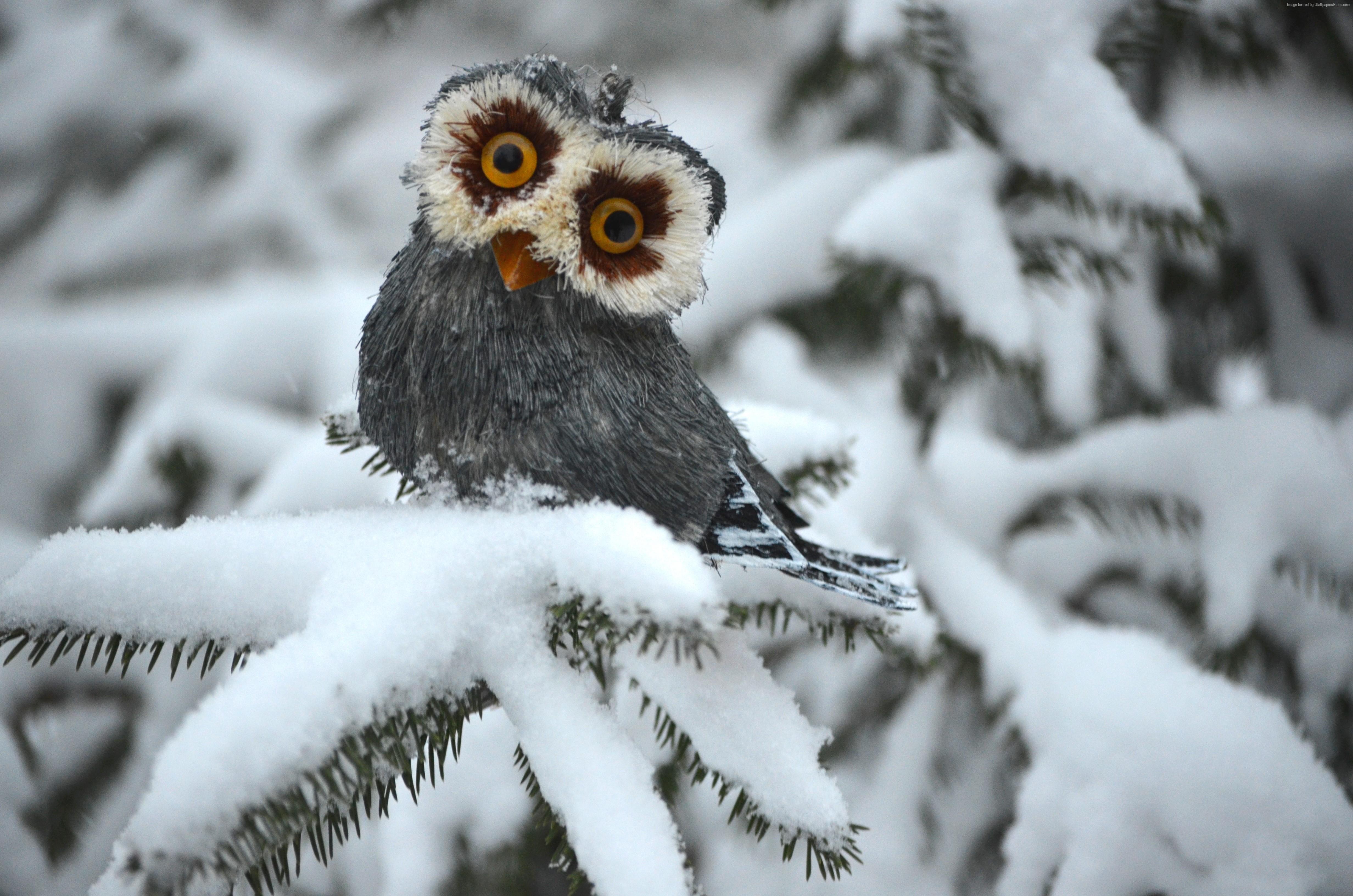 owl winter bird animal - photo #3