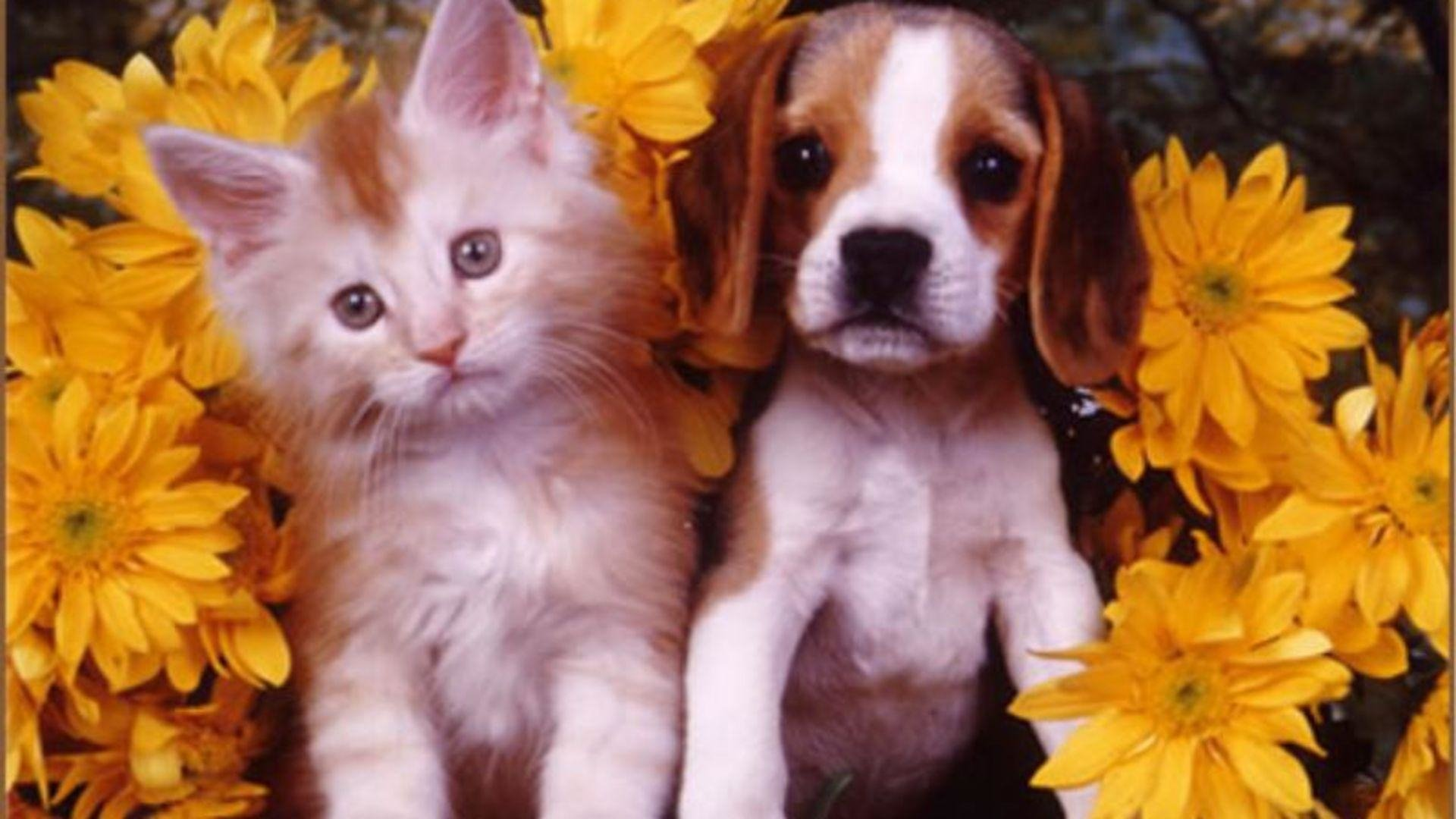 Adorable Kitten And Puppy HD Wallpaper