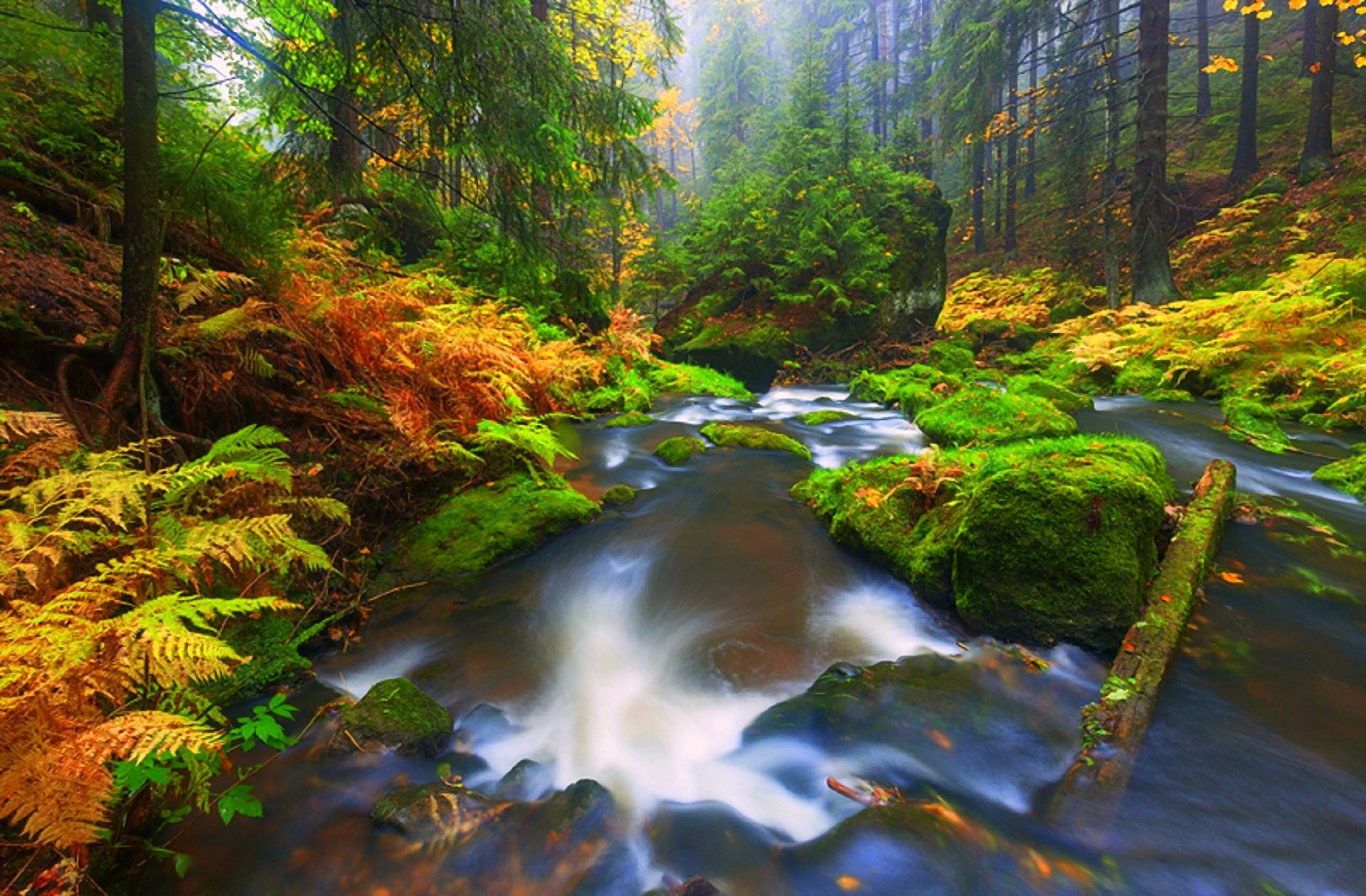 the fall stream