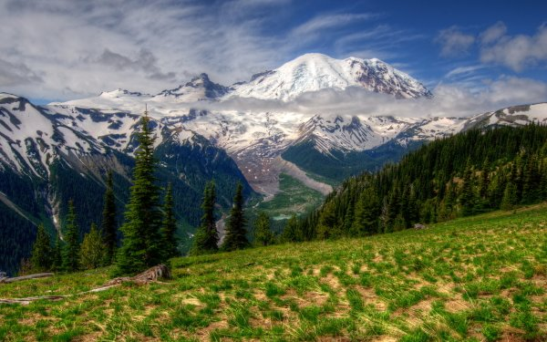 Earth Mount Rainier Mountains Tree Forest Mountain Snow HD Wallpaper | Background Image