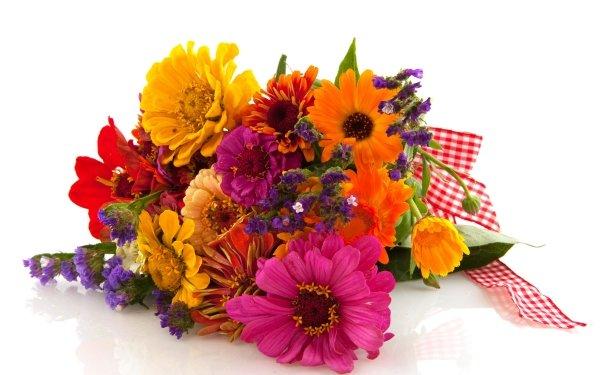 Construction Humaine Fleur Gerbera Zinnia Couleurs Bouquet Yellow Flower Orange Flower Red Flower Purple Flower Pink Flower Fond d'écran HD | Image